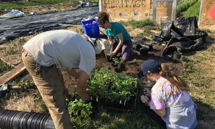 Building Community through Urban Farming