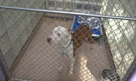 North Philadelphia: Adopting a Pet From the PSPCA Helps Saves the Lives of Many Animals